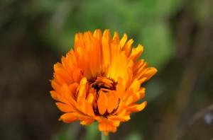 20130901-1361_Blumen